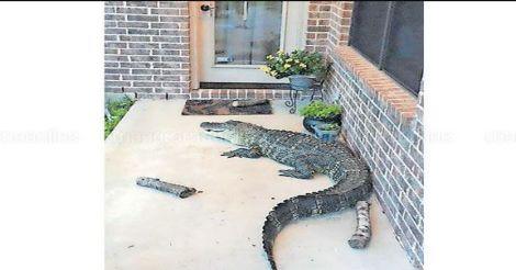 crocodile-huston