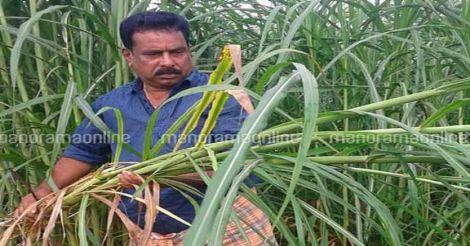 jayachandran-grassfarmer