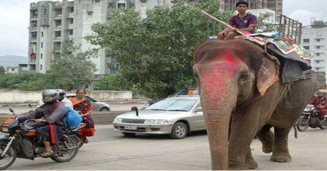 elephant-lekshmi