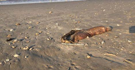 sea-creature1.jpg.image.784.410