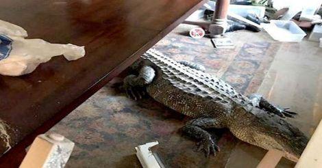 crocodile-huston1